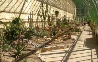 (34) La serre Martins - Jardin des plantes de Montpellier - Page 2 Serre131