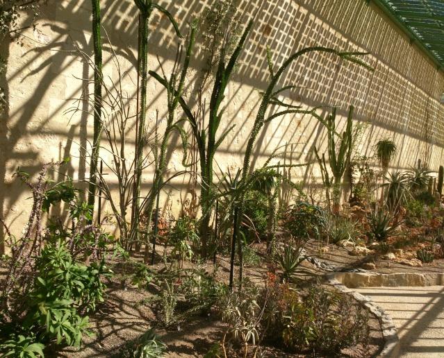 (34) La serre Martins - Jardin des plantes de Montpellier - Page 2 Serre132