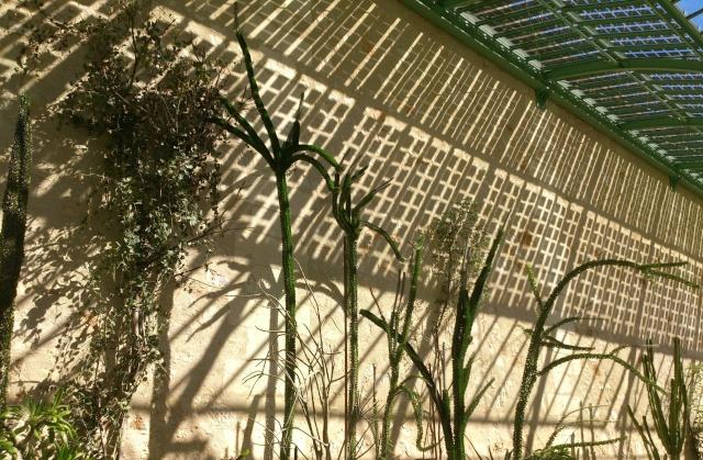 (34) La serre Martins - Jardin des plantes de Montpellier - Page 2 Serre133