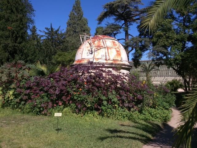 (34) La serre Martins - Jardin des plantes de Montpellier - Page 2 Serre156