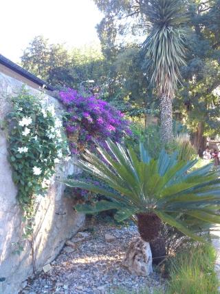 (34) La serre Martins - Jardin des plantes de Montpellier - Page 2 Serre161