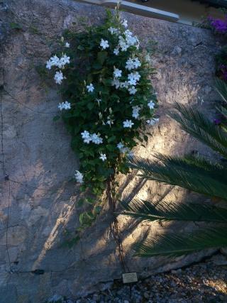 (34) La serre Martins - Jardin des plantes de Montpellier - Page 2 Serre163