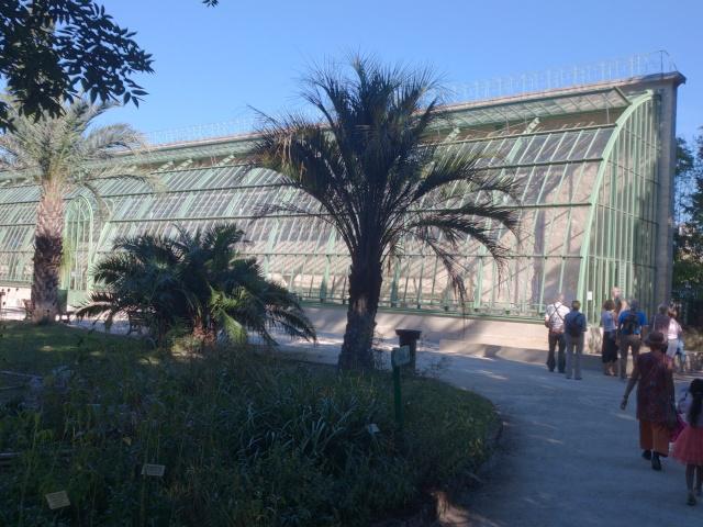 (34) La serre Martins - Jardin des plantes de Montpellier Serre_21
