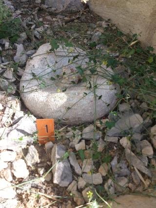 (34) La serre Martins - Jardin des plantes de Montpellier Serre_23