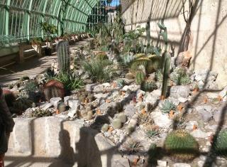 (34) La serre Martins - Jardin des plantes de Montpellier Serre_26