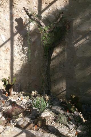 (34) La serre Martins - Jardin des plantes de Montpellier Serre_30