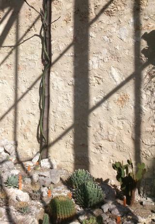 (34) La serre Martins - Jardin des plantes de Montpellier Serre_32