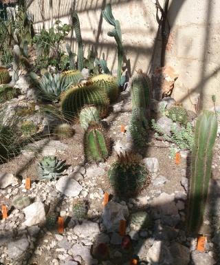 (34) La serre Martins - Jardin des plantes de Montpellier Serre_34