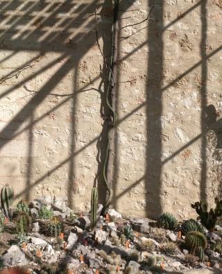(34) La serre Martins - Jardin des plantes de Montpellier Serre_36