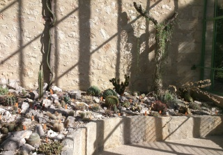 (34) La serre Martins - Jardin des plantes de Montpellier Serre_38