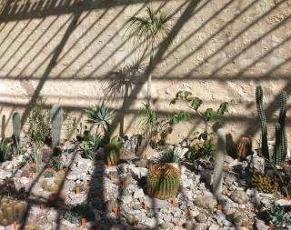 (34) La serre Martins - Jardin des plantes de Montpellier Serre_45