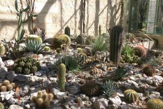 (34) La serre Martins - Jardin des plantes de Montpellier Serre_48