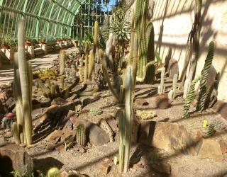 (34) La serre Martins - Jardin des plantes de Montpellier Serre_61