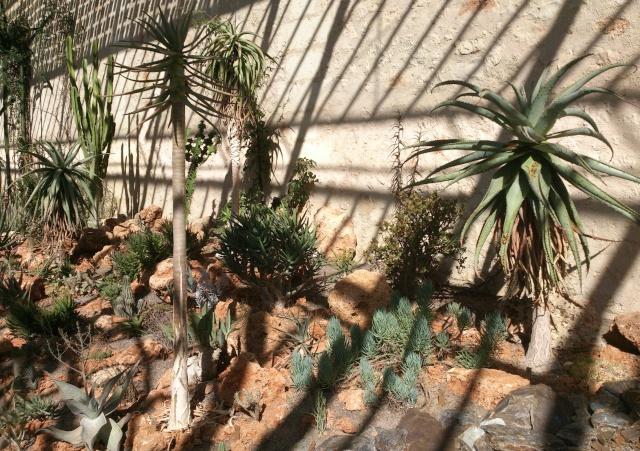 (34) La serre Martins - Jardin des plantes de Montpellier Serre_83