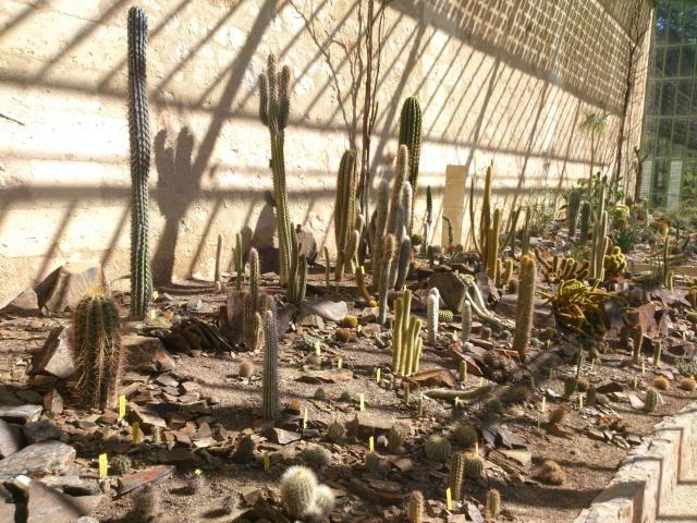 (34) La serre Martins - Jardin des plantes de Montpellier Serre_85