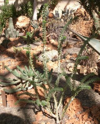 (34) La serre Martins - Jardin des plantes de Montpellier Serre_87