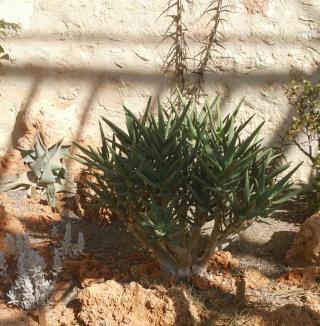 (34) La serre Martins - Jardin des plantes de Montpellier Serre_89