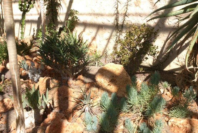(34) La serre Martins - Jardin des plantes de Montpellier Serre_93