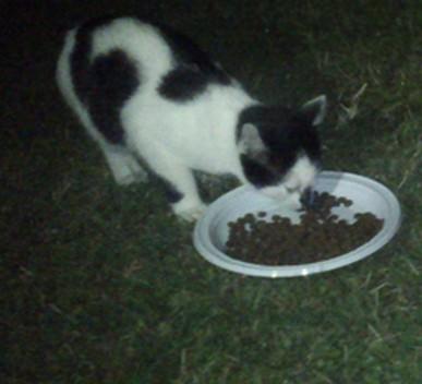 3 chatons 4 mois + un chaton d'un mois et demi  Fvigno10