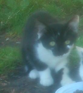3 chatons 4 mois + un chaton d'un mois et demi  Mvigno10