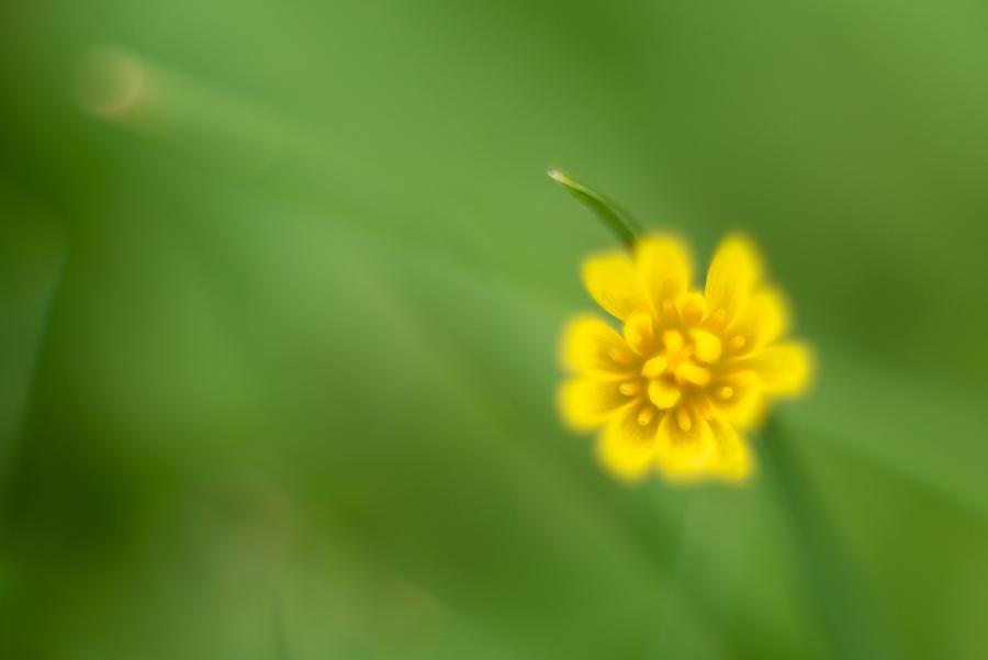 Sun ou est tu... ;) Fleur-10