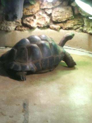 """photos tortues """"ménagerie du jardin des plantes"""" a Paris Img_0211"""