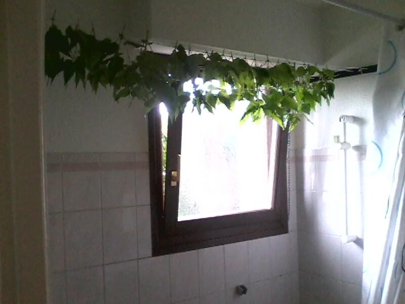 Les Orties : la plante panacée ? En consommez-vous et comment ? Img00114