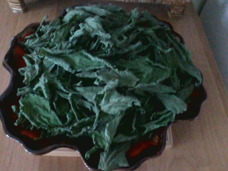 Les Orties : la plante panacée ? En consommez-vous et comment ? Img00115