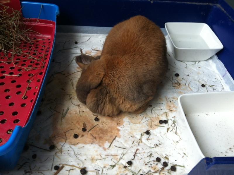 Kallie, lapine bélier née en 2008 - Page 18 Photo810