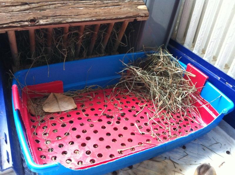 Kallie, lapine bélier née en 2008 - Page 18 Photo811