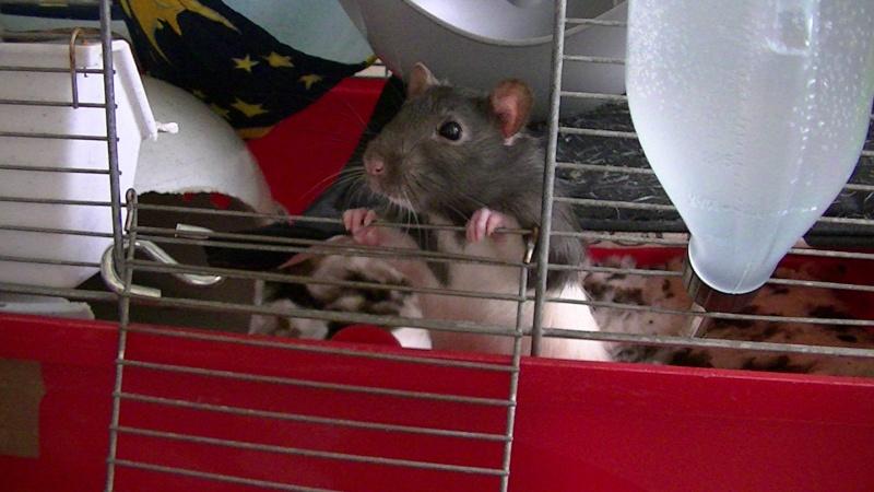 Et voilà mes bébés!!!!! Pic_0116