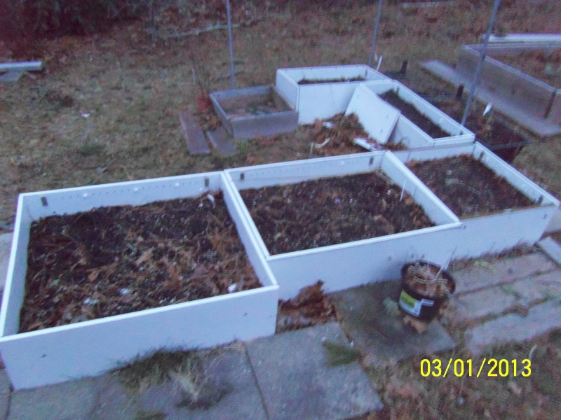Monthly Avatar Theme March 2013: Your Garden In March! part 1 100_5214