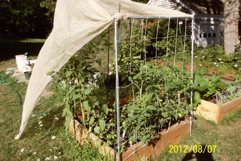 Recommended source for garden grade tulle and good shade cloth? Aug_7_11