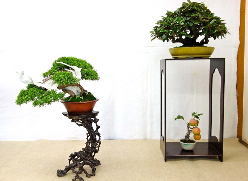 Higo Gayu kai annual exhibition 2014 Dsc01411