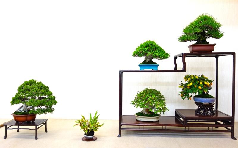 Higo Gayu kai annual exhibition 2014 Dsc01414