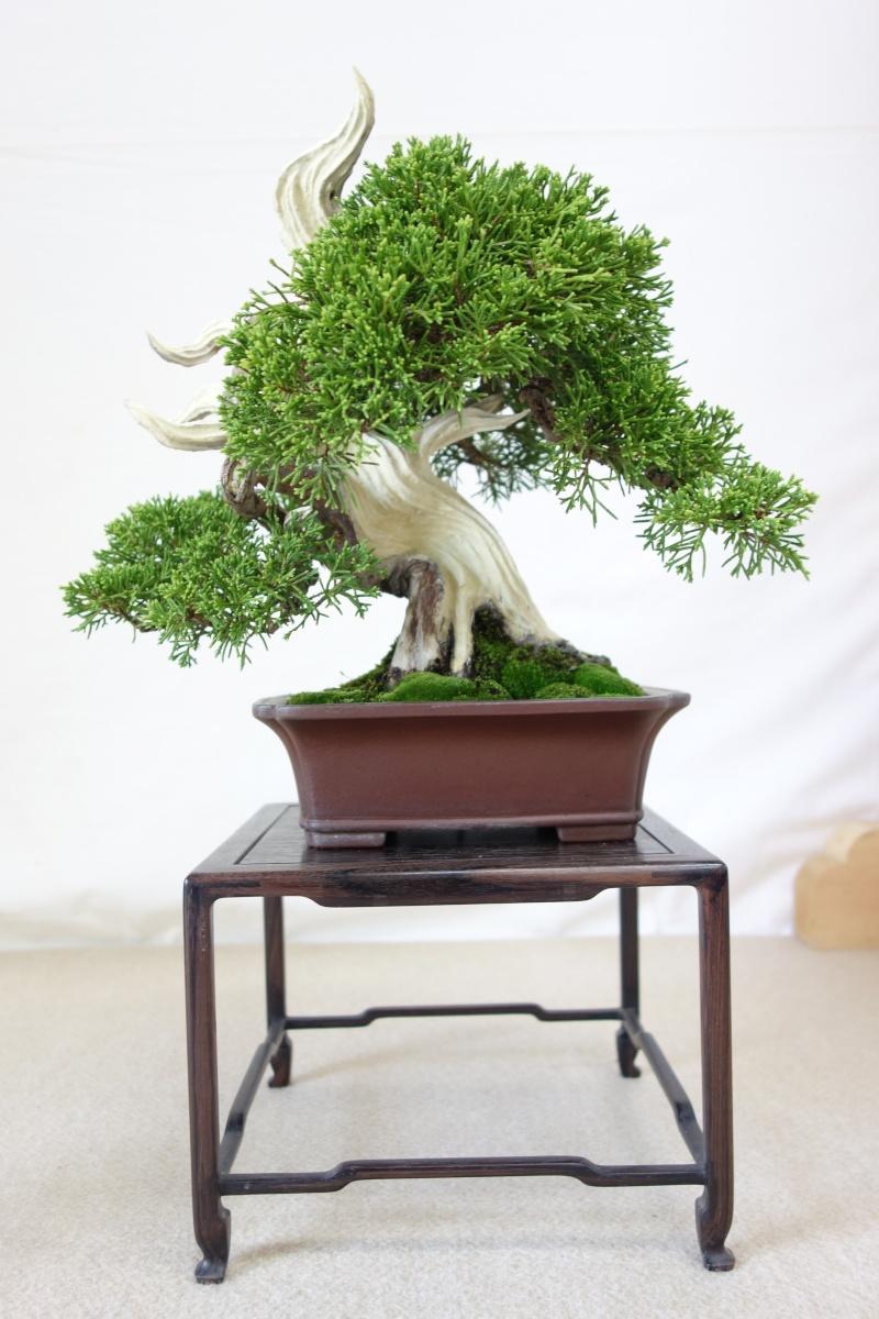 Higo Gayu kai annual exhibition 2014 Dsc01428