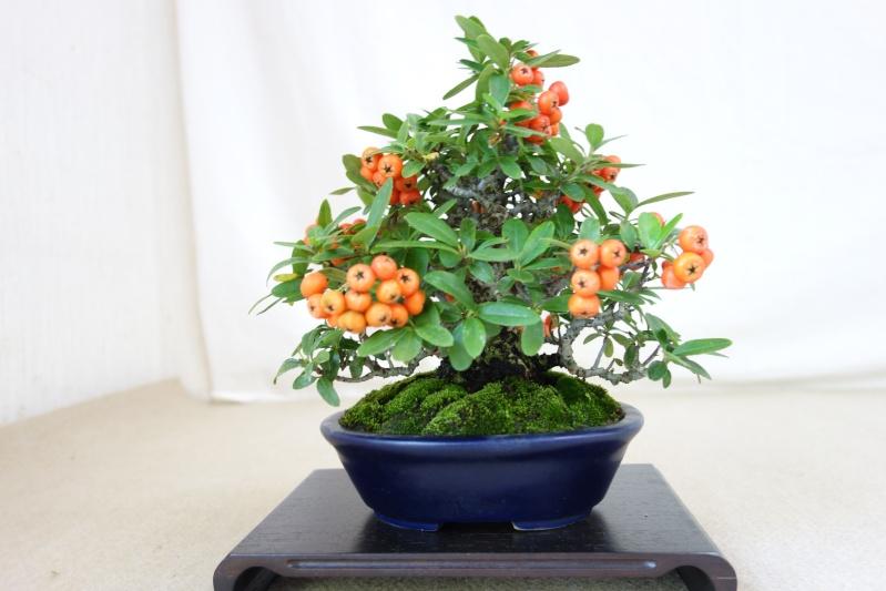 Higo Gayu kai annual exhibition 2014 Dsc01429