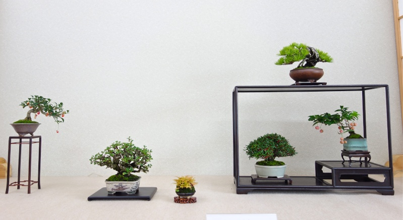 Higo Gayu kai annual exhibition 2014 Dsc01433
