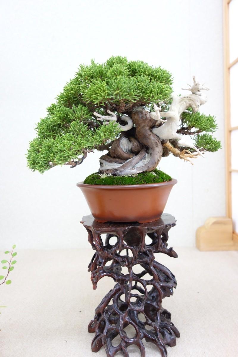 Higo Gayu kai annual exhibition 2014 Dsc01436