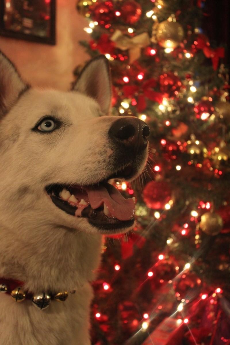 HOTM Chat: December - waiting for Santa Img_6610
