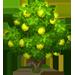 Vous cherchez un arbre ? Venez cliquer ici !!! Guavat10
