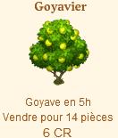Goyavier Sans_t44