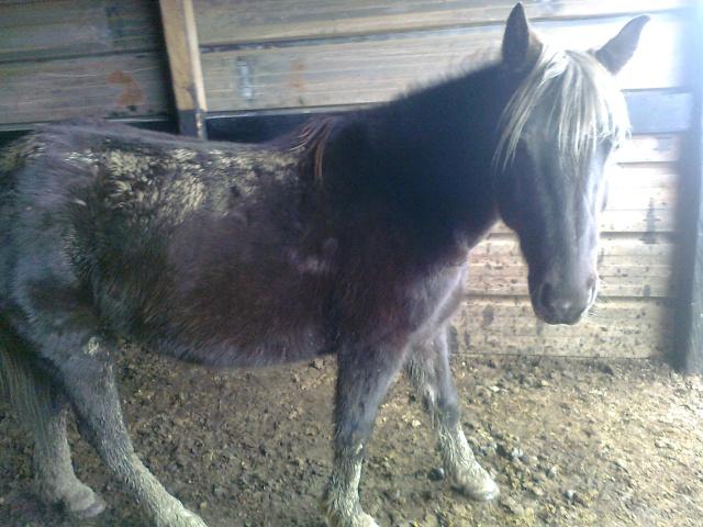PELIPA - ONC Poney née en 2007 - adoptée en septembre 2014 par Ceed Photo087