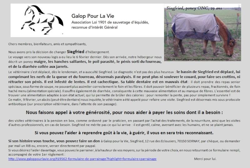 SIEGFRIED - Hongre poney ONC né en 1984 - Protégé GPLV Sieg_a10