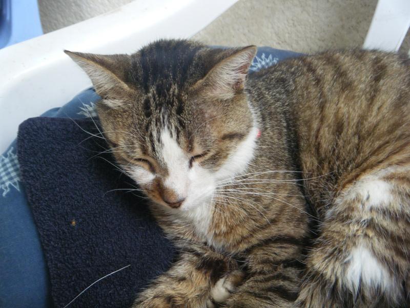 mon chat et mon pinous :) Dscf2711