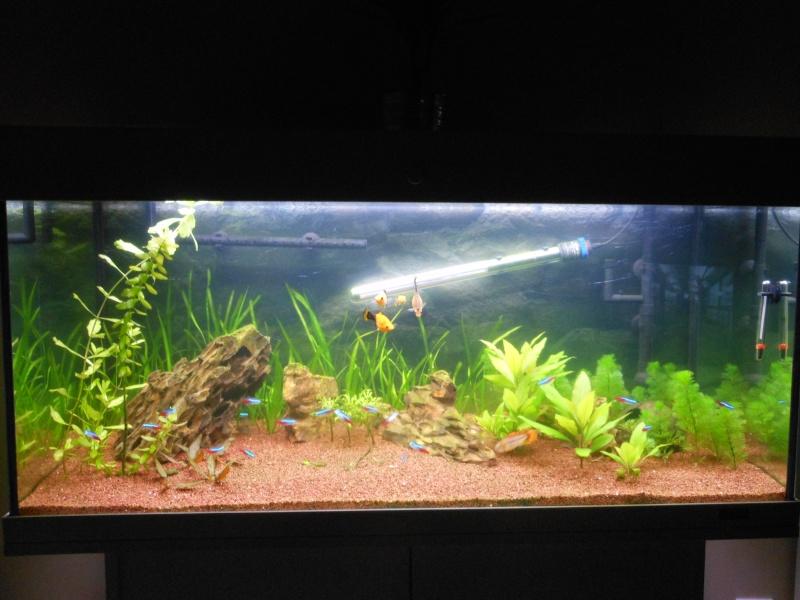 rio 180l aquarium arrêté à supprimer svp Dscn0410