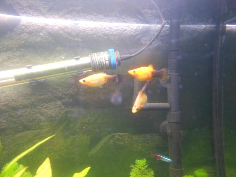 rio 180l aquarium arrêté à supprimer svp Dscn0511