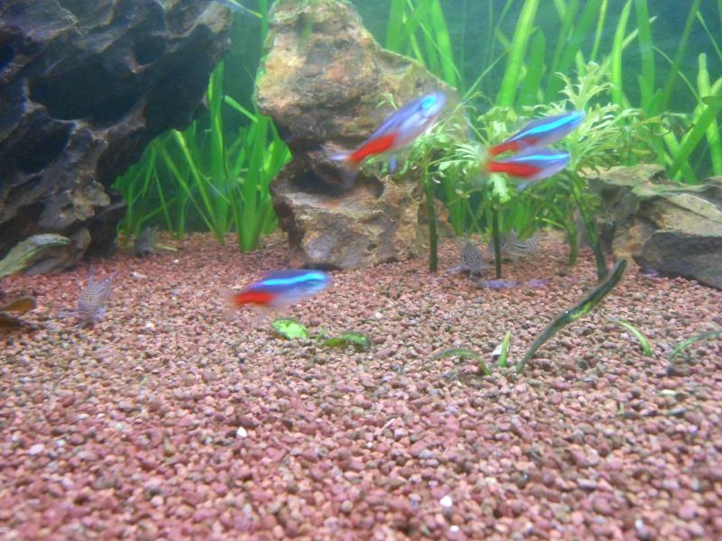 rio 180l aquarium arrêté à supprimer svp Dscn0512