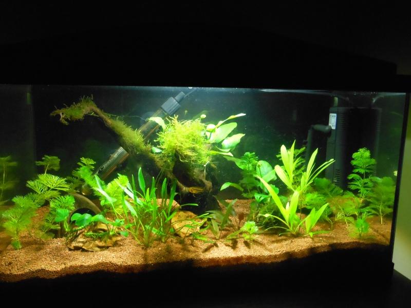 rio 180l aquarium arrêté à supprimer svp Dscn0513
