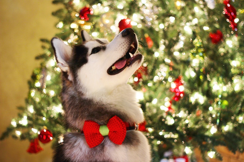 HOTM Chat: December - waiting for Santa Img_2210